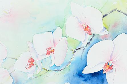 Orchideen I