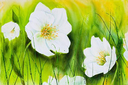Christrosen im Frühling
